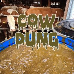Cow Dung